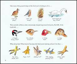 Look Up Bird Watching In Your Own Backyard Stacking Books