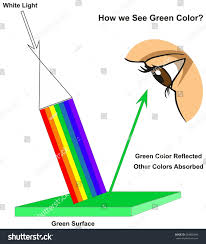 Color And Light Absorption How We See Green Color Infographic Stock Illustration 694882846