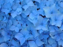 Aesthetic Light Blue Flower Background ...