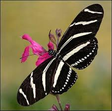 Image result for photo de papillons