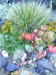 Small Picture 157 best Succulent Mediterranean Gardening images on Pinterest