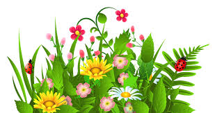 grass and flowers border. Modren Flowers Flowers Clipart Border Spring  Intended Grass And R