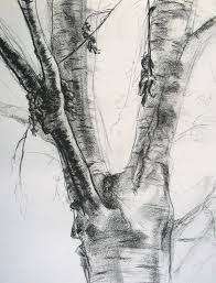 tree charcoal drawing trees 1 charcoal landscape
