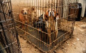 animal welfare essay open letter to those who support violence in the of animal rights