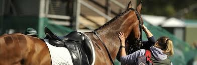 bga groom horse rider travel insurance