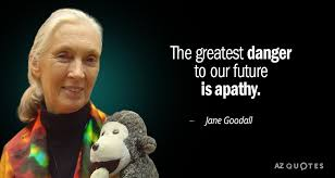 Jane Goodall Quotes Gorgeous TOP 48 QUOTES BY JANE GOODALL Of 48 AZ Quotes