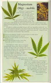 How To Fix Cannabis Magnesium Deficiency Mg Pics Symptoms