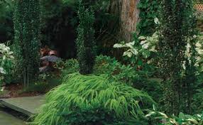 Small Picture Conifers for Shade Fine Gardening