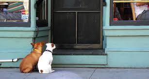 pet door installation gold coast gold