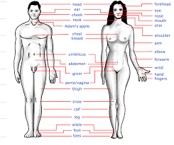 Human Anatomy Chart - Page 21 of 202 - Pictures Of Human Anatomy Body