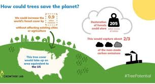 Tree Growth Rates Chart Uk Climate Change Trees Most Effective Solution For Warming