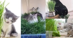 diy indoor cat garden for cat