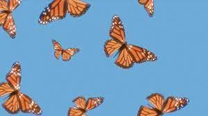 Butterfly wallpaper, Laptop wallpaper ...