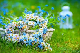 Image result for summer flowers wallpaper