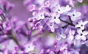 Purple Floral Wallpapers - Top Free ...