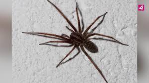 Spinnen Vertreiben Die Besten Tipps Gegen Spinnen Im Haus