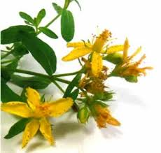 Annies Remedy Herbs For Self Healing
