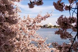 Вашингтон округ Колумбия Энциклопедия США Весна в Вашингтоне округ Колумбия