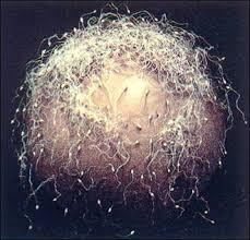 「biological sex」の画像検索結果