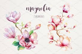 Watercolour Magnolia By Peace Art On At Creativemarket акварель в