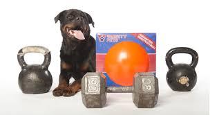 the varsity ball large dog toys big dog toys indestructible dog toy tough dog toys