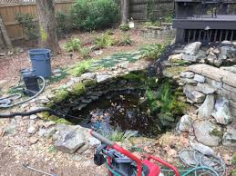 how to clean a koi pond. Modren Koi What Is Involved In A Koi Pond Cleaning Intended How To Clean A Koi Pond