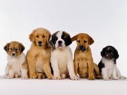 Resultado de imagem para imagens de pet shop