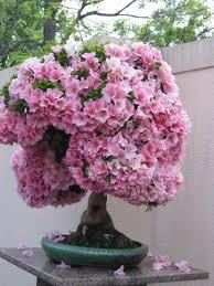 54 unique and attractive bonsai tree design ideas bonsai tree interior