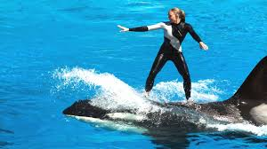 amazing show of whale and dolphin sea world san go you