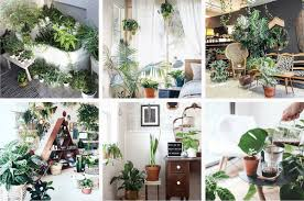 39 Instagram accounts for plant and flower lovers