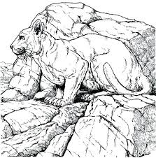 mountain lion black and white coloring page printable mountain lion black and white coloring mountain coloring page mountain lion coloring page mountain