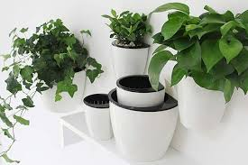 best hanging plants and planters the