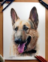 realistic drawings of animals in color. Dog Drawings Animals To Realistic Of In Color