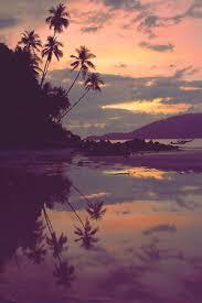 palm trees sunset tumblr. Beach, Beautiful, Palm Trees, Summer, Sunset Trees Tumblr Y