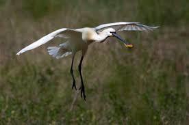 faune oiseaux nature baie de somme hauts de