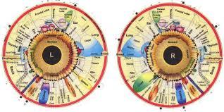 What Is Iridology Chart What Is Iridology Diagnosis Chart Iriscope Iridology