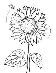 Small Picture Sunflower Coloring Pages chuckbuttcom