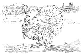 Small Picture Free Turkey Coloring Pages