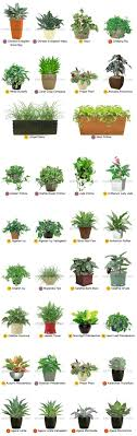 office cubicle plants. Desktop Office Plants By Plantscape Inc.: Cubicle