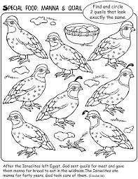 Small Picture 42 best MANNA QUAIL FROM HEAVEN images on Pinterest Moses