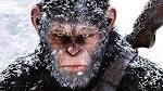 stor kuk ass til munn sjimpanse