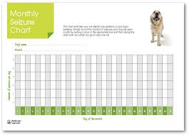 Monitoring Your Dogs Seizures Dogs With Epilepsy