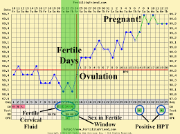 Ovulation Chart Pregnancy Signs Do You Get Pregnant During Ovulation Or When Your Fertile