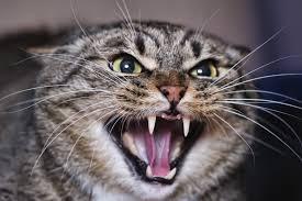 feline stomatitis treatment cost.  Feline Enamel Allergy Stomatitis In Cats To Feline Stomatitis Treatment Cost