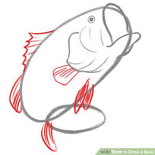 bass fish drawing step by step. Simple Step Image Titled Fins Step 3 With Bass Fish Drawing By E