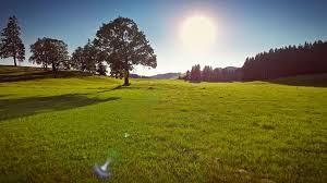 Aerial forward motion grassland beautiful field green grass sunshine