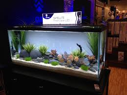 838 best Fish Tranquility images on Pinterest | DIY, Deko and Freshwater fish  tank