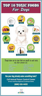What Can Dogs Eat Chart Food That Are Toxic To Dogs 10 Foods To Avoid