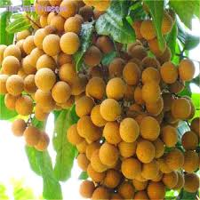 1008977601213379902786547589363ojpgNon Gmo Fruit Trees For Sale