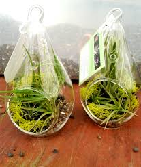 Creative Idea:Beautiful Pastel Color Air Plant Pods Awesome Clear Glass  Pears Air Plants Display